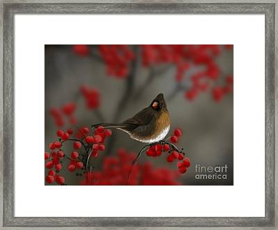 Cardinal Among The Berries Framed Print