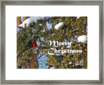 Cardinal Christmas Card Framed Print by Aimee L Maher Photography and Art Visit ALMGallerydotcom