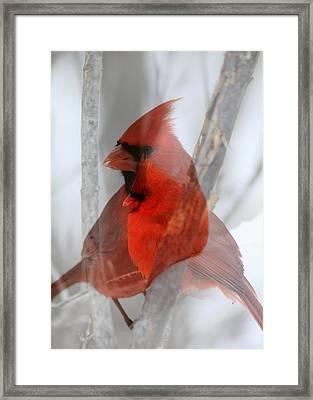 Cardinal Collage Framed Print by Rick Rauzi
