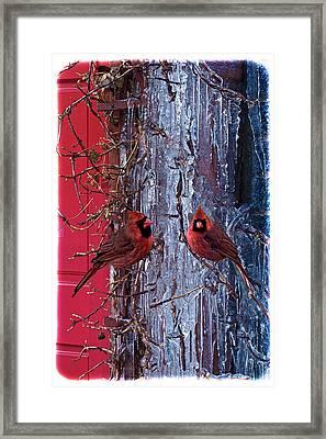 Cardinal Icicles Framed Print