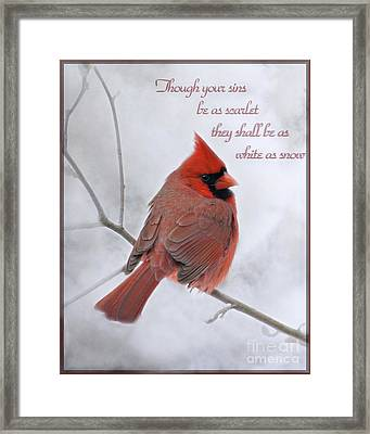 Cardinal In The Snow - D001540 Framed Print by Tandem Designs