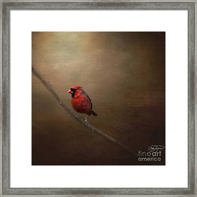 Cardinal Old Master - Artist Cris Hayes Framed Print by Cris Hayes