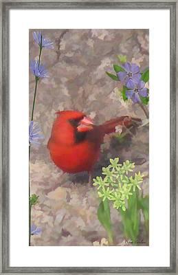 Cardinal Springtime Framed Print by Debra     Vatalaro