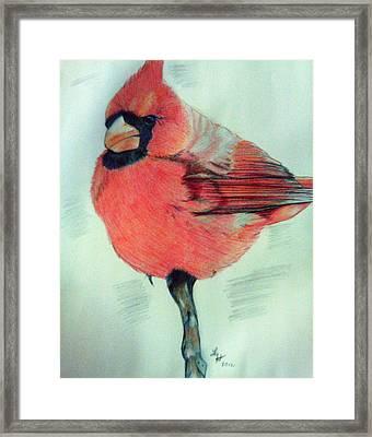 Cardinal Study Framed Print