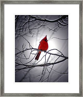Framed Print featuring the photograph Cardinal by Yvonne Emerson AKA RavenSoul