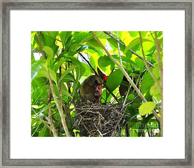 Cardinals Caterpillars Framed Print