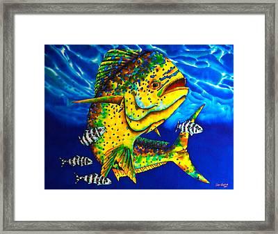 Caribbean Bull Framed Print