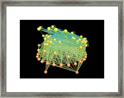 Caribbean Coral Reef Food Web Model Framed Print