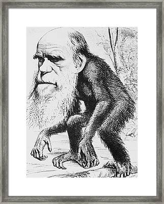 Caricature Of Charles Darwin, 1871 Framed Print