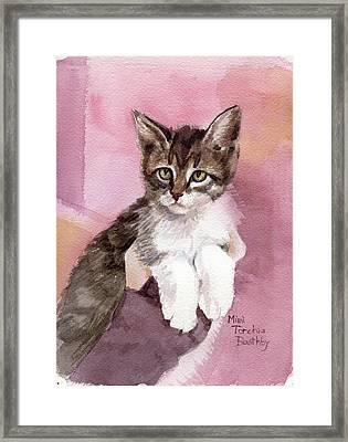 Carlisle - Kitten Framed Print