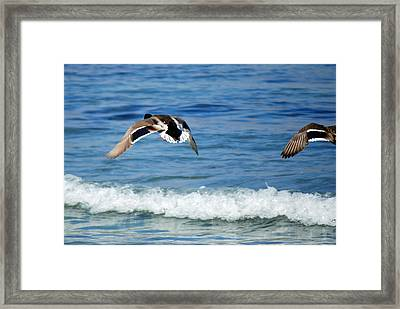 Carmel Bay And Duck In Flight Framed Print by Harvey Barrison