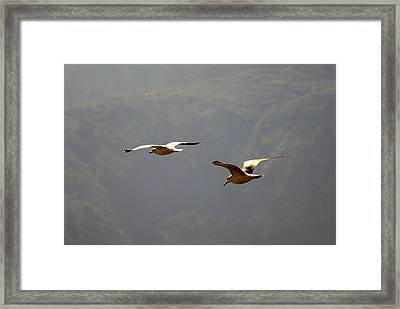 Carmel Birds In Flight  Framed Print by Harvey Barrison