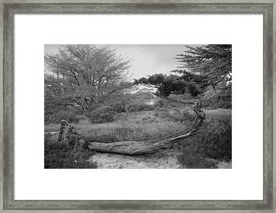 Carmel Ca Framed Print by Julie VanDore