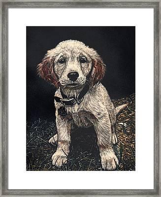 Carmen The Puppy Framed Print by Robert Goudreau