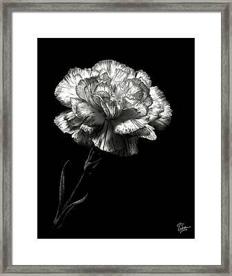Carnation In Black And White Framed Print