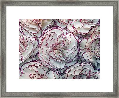 Carnations Flowers Framed Print by Dragan Todorovic