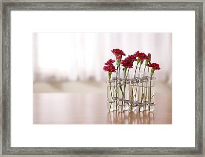 Carnations Flowers Framed Print by Fumie Kobayashi