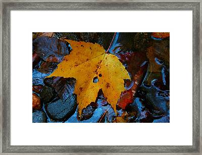 Carolina Blue Reflections Framed Print by Christine Annas