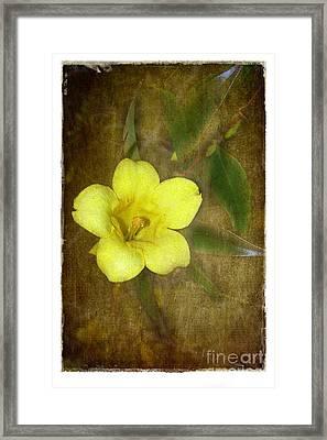 Carolina Jessamine Framed Print by Judi Bagwell
