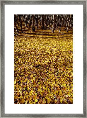 Carpet Of Aspen Leaves Framed Print