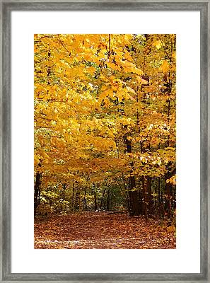 Carpet Of Leaves Marks The Path Framed Print by Bruce Bley