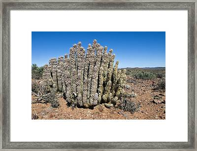 Carrion Plant Framed Print