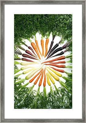 Carrot Pigmentation Variation Framed Print by Science Source