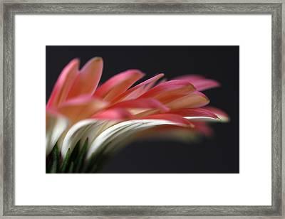 Cascade Framed Print by Juergen Roth