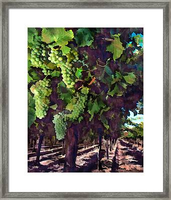 Cascading Grapes Framed Print by Elaine Plesser