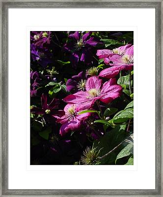 Framed Print featuring the photograph Cascading Rose by Frank Wickham