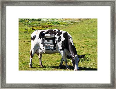 Cash Cow . 7d16140 Framed Print by Wingsdomain Art and Photography