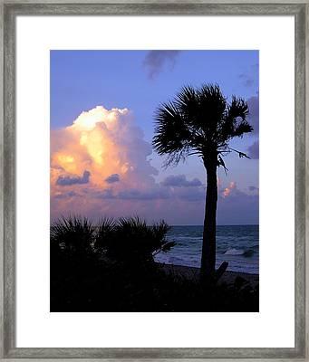 Casperson Beach Sunrise With Palm Framed Print