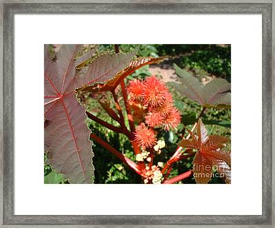 Framed Print featuring the photograph Castor by Mark Robbins