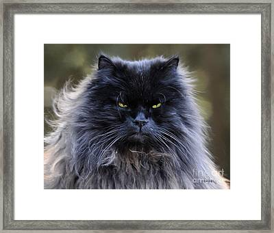 Cat-a-tude Framed Print by Diane E Berry