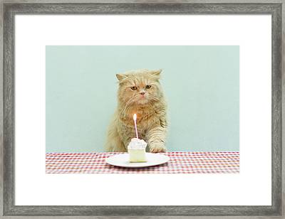 Cat About To Bllow A Candle Framed Print by Nga Nguyen