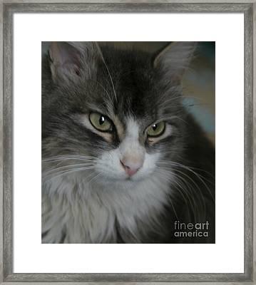 cat Framed Print by Alisa Tek