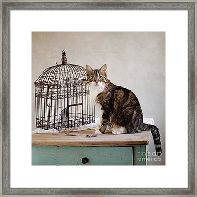 Cat And Bird Framed Print by Nailia Schwarz