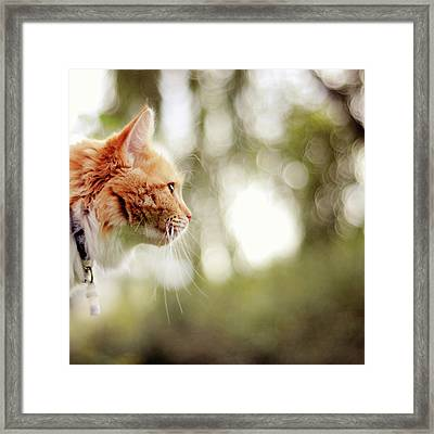 Cat And Bokeh Background Framed Print