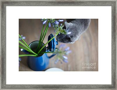 Cat And Flowers Framed Print