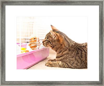 Cat And Hamster Framed Print by Tom Gowanlock