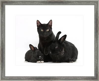 Cat And Rabbits Framed Print by Mark Taylor