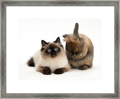Cat And Rabbt Framed Print by Jane Burton