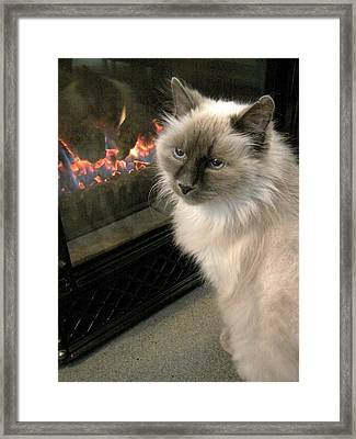 Cat And The Fireplace Framed Print by Patricia Drohan