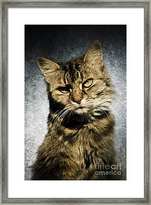 Cat Asks Question Framed Print by David Lade