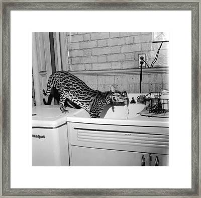 Cat At The Tap Framed Print by Sherman