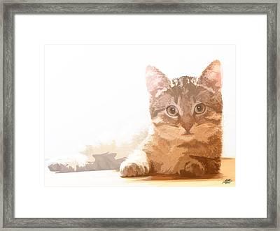 Cat Basking In Sunshine Framed Print by Steve Huang