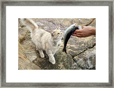 Cat Being Fed A Fish Framed Print by Bjorn Svensson