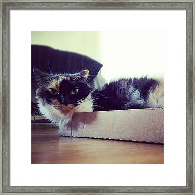 #cat #cardboardbox #pet #silly #animal Framed Print