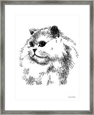 Cat Drawings 4 Framed Print by Gordon Punt
