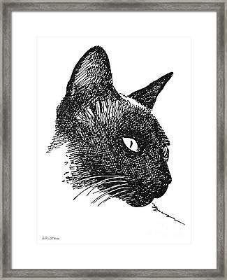 Cat Drawings 5 Framed Print by Gordon Punt